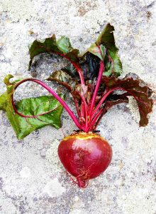 Beet on a stone background