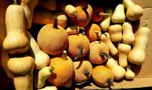 harvested squashes and pumpkins