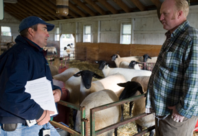 extension expert and sheep producer in barn with sheep; photo by Edwin Remsberg, USDA