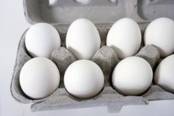 chicken eggs in carton