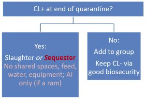 Decision Tree: CL+ at end of quarantine? Yes: Slaughter or Sequester No shared spaces, feed, water, equipment; AI only (if a ram). No: Add to group Keep CL- via good biosecurity.