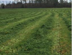 cut hayfield