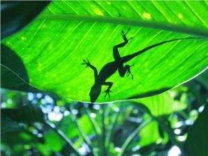 A lizard on a leaf