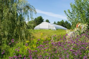 Hoop house in field of flowers