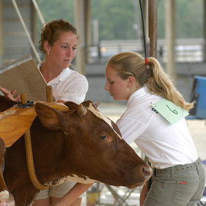 4-Her competes in livestock show at the fair