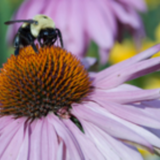 up close photo of purple flower with bee pollinating the center