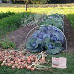 Maine Harvest for Hunger vegetable garden