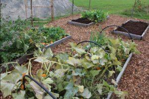 Sedo School Garden
