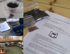 Seeds, dirt in a cup and directions
