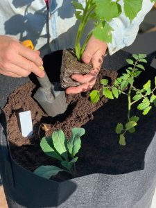 hands planting a plant in a growing bag