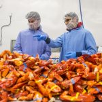 Jason Bolton works with seafood processor