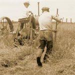 two men haying a field