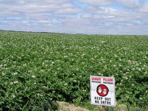 pesticide sign in a potato field