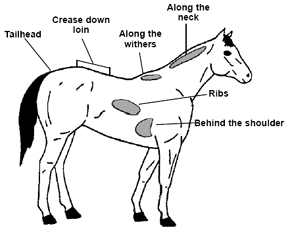 figure showing areas of fat in a horse