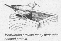 Mealworms provide many birds with needed protein.