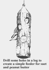 Illustration of a small bird at a simple log feeder; holes were drilled into the log to hold suet or peanut butter.