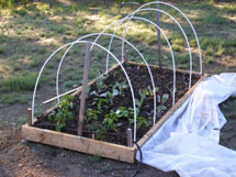 Raised bed without plastic.