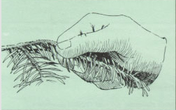 Grasp the branch firmly between the thumb and forefinger.
