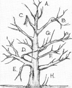 Where to prune