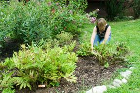 Extension expert planting a rain garden; photo by Edwin Remsberg, USDA