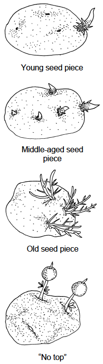 "young seed piece; middle-aged seed piece; old seed piece; ""no top"""