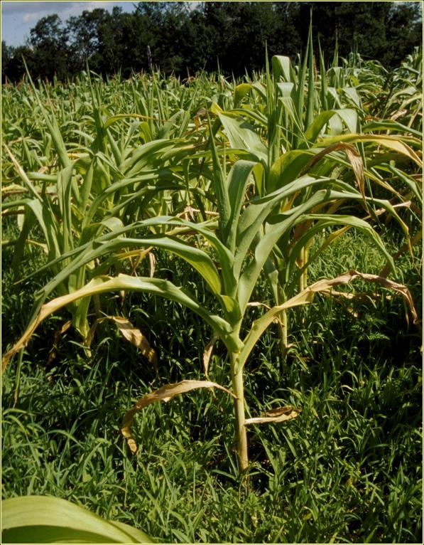 Bulletin #1124, New England Guide to Weed Control in Field