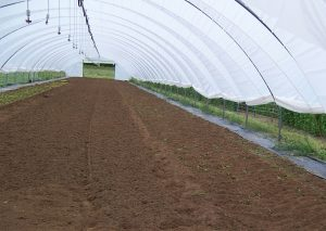 High tunnel ready for planting.