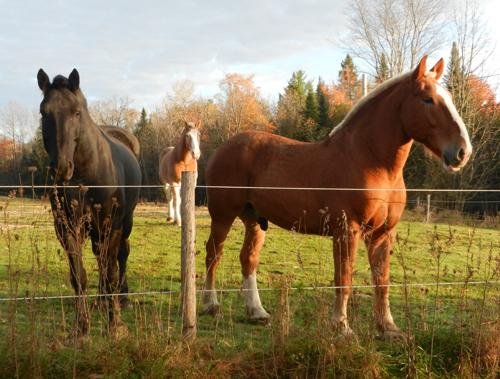 three horses in pasture