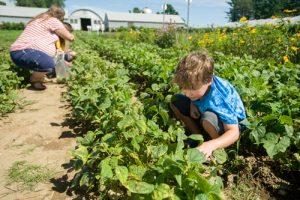 Family members pick fresh produce