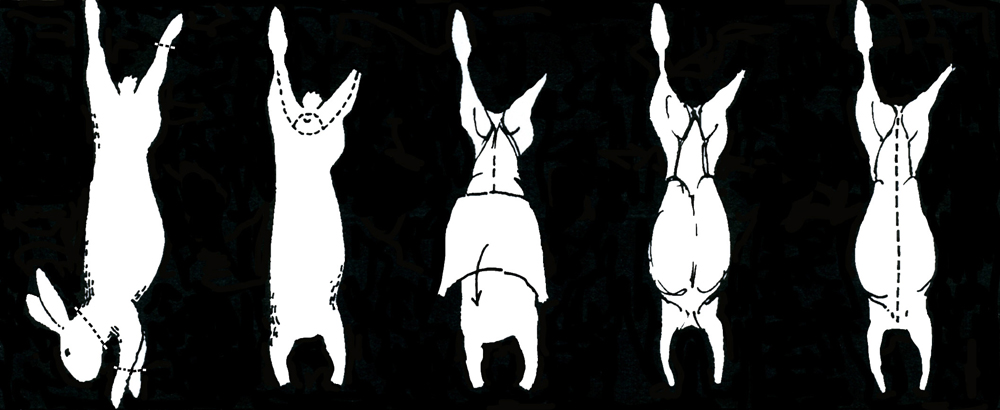 illustration showing how to butcher a rabbit