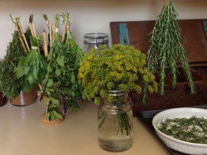 herbs air drying