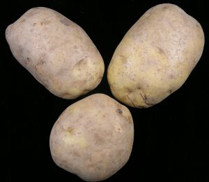 potatoes with silver scurf