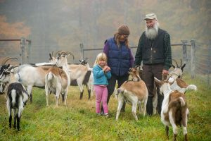 man, woman, and child with herd of goats