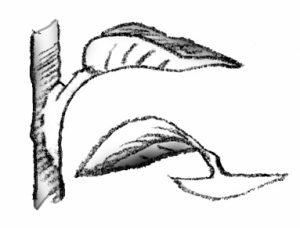 illustration showing heel cutting