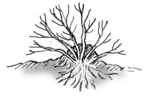 illustration showing mound layering