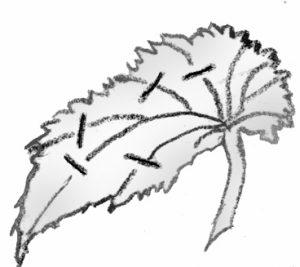 illustration showing split vein cutting