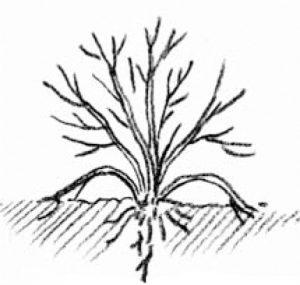 illustration showing tip layering