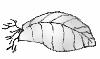 illustration showing whole leaf cutting without petiole
