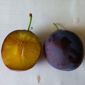 Caselton plums