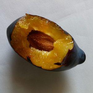 Longjohn plum