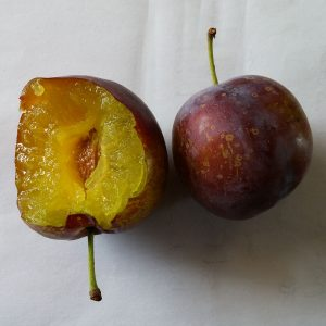 Gras Ameliorat plums
