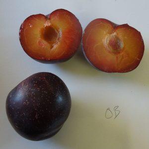 Obilnaya plums