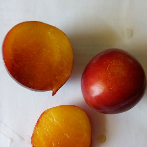 Kahinta plums
