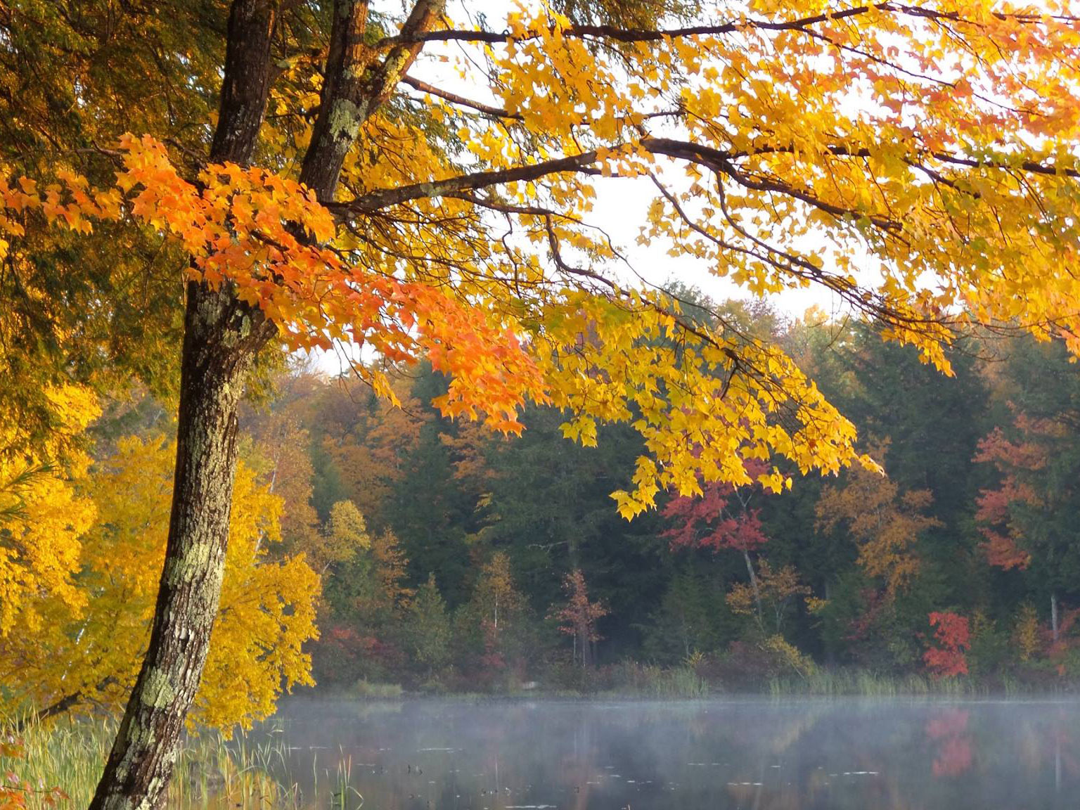 Bulletin 7078 Facts About Leaf Color In Maine Cooperative