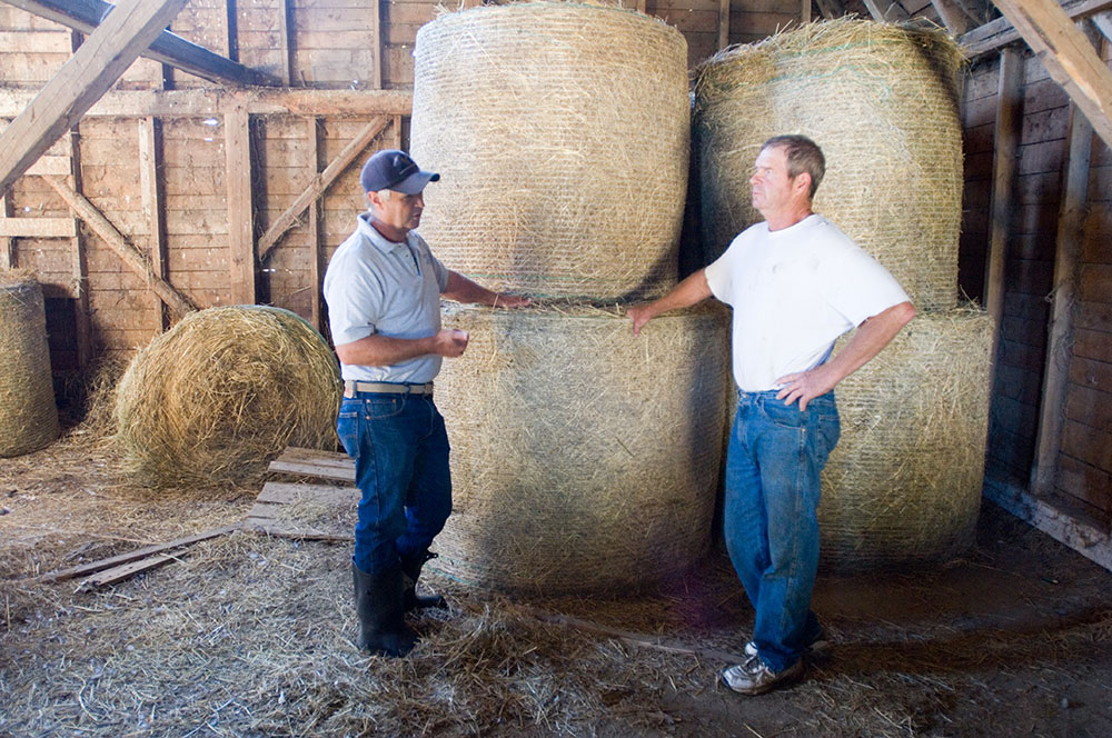 UMaine Extension expert and a dairy farmer talking in front of stacked round hay bales in a barn