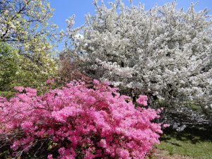 flowering trees and shrubs in the Lyle E. Littlefield Garden, UMaine