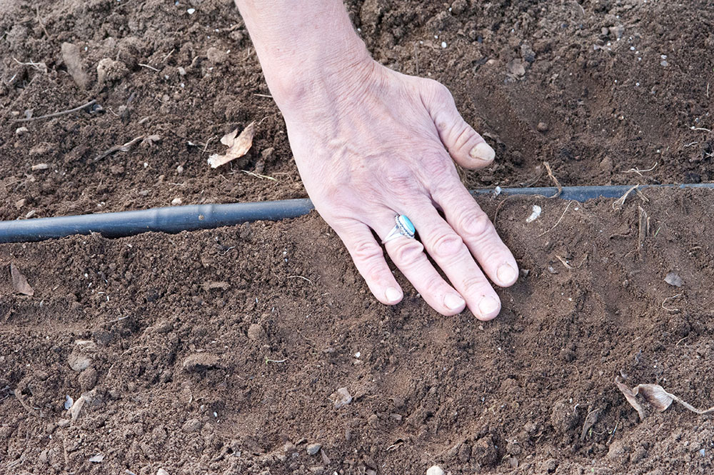 planting seeds in a garden with drip irrigation