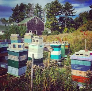Apiary at Tidewater Farms