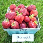 basket of Brunswick strawberries