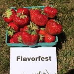 basket of Flavofest strawberries